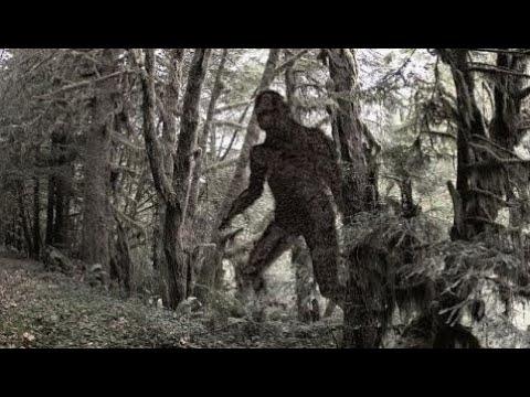 Best Bigfoot video  Hemiplegic Bigfoot & Parent watch in Utah