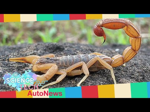 Breaking News  – Indian woman, 54, dies after being stung by a scorpion