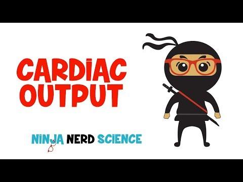 Cardiovascular: Cardiac Output