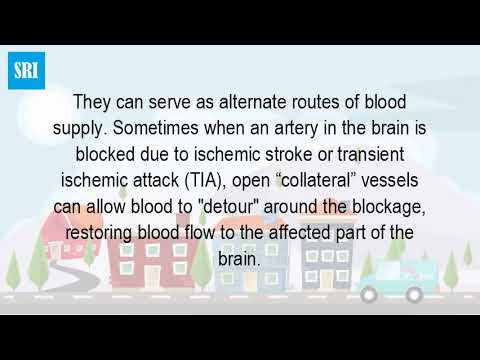 What Is Collateral Blood Flow In A Stroke?